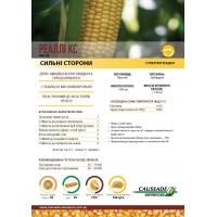 Насіння кукурудзи Реаллі КС ФАО 420
