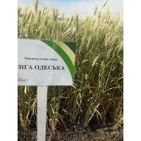 Пшениця озима Ліга Одеська