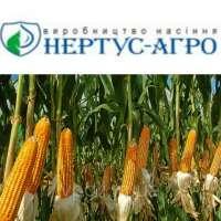 Насіння кукурудзи Нертус 183 СВ
