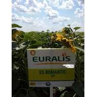 Насіння соняшника ЕС Романтік