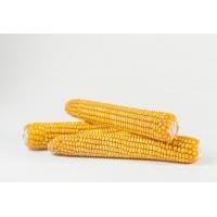 Насіння кукурудзи Товтрянський 188св